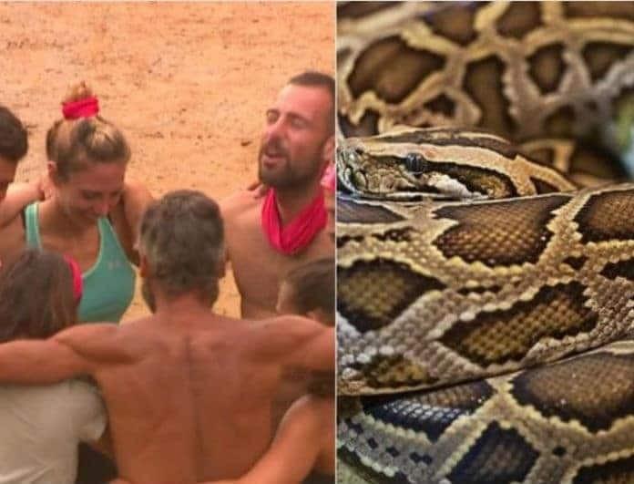 Survivor - αποκάλυψη: Το τεράστιο φίδι που εμφανίστηκε στο ριάλιτι και προκάλεσε πανικό! Έντρομοι παίκτες και παραγωγή!