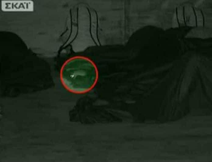 Survivor 2: Χαμός στην καλύβα των Μαχητών! Ποντίκι δάγκωσε παίκτρια! Ο λόγος για την...